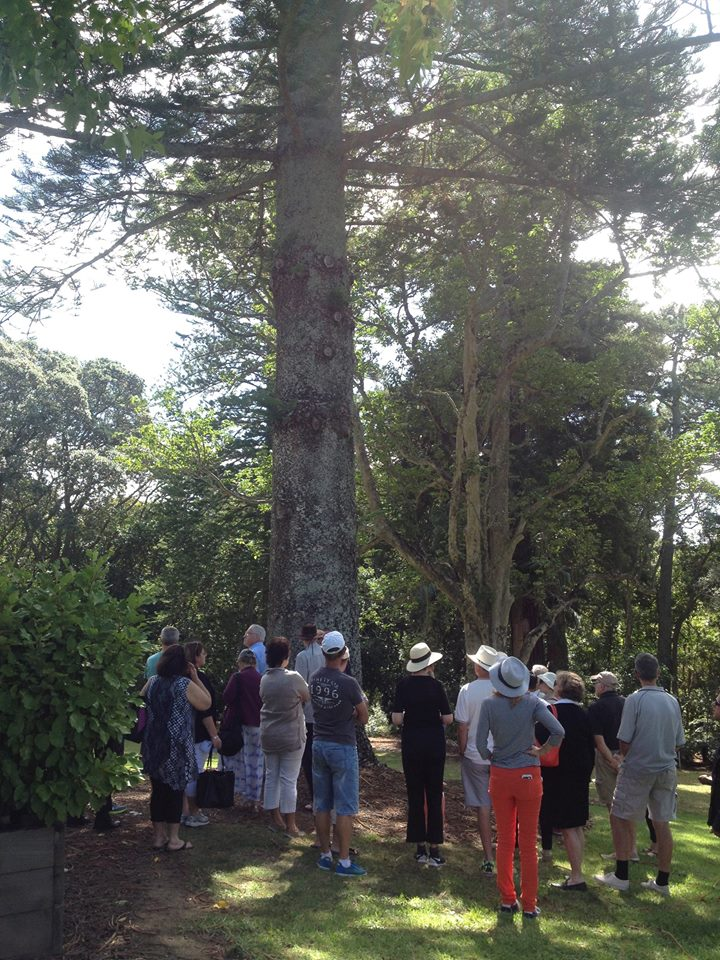 Massive trees throughout the grounds - many with interesting stories of how their seeds travelled to New Zealand.
